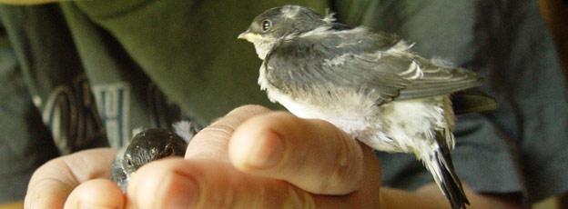 Berühmt Rote Vogelmilbe übertragbar auf den Menschen - www.die-rote @FW_24